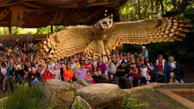Flights of Wonder Disney's Animal Kingdom Closing in 2017