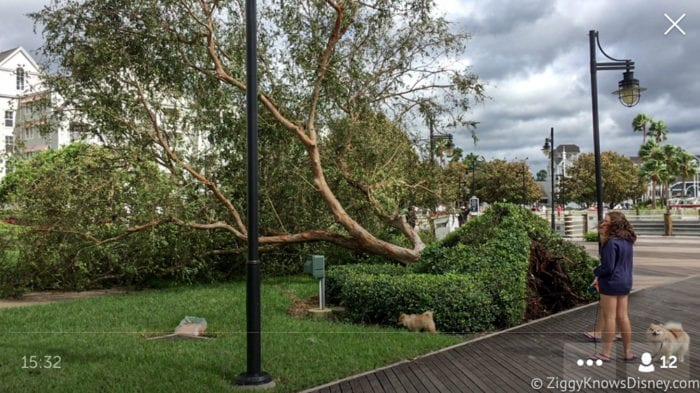 Hurricane Irma in Walt Disney World trees down 12