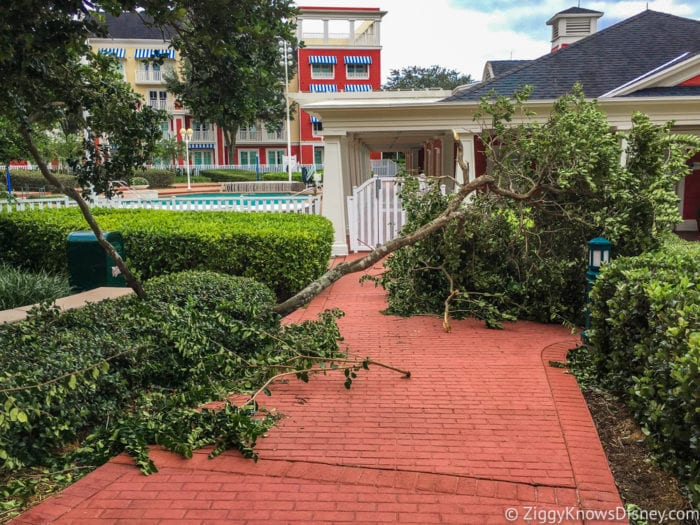 Hurricane Irma in Walt Disney World trees down 6