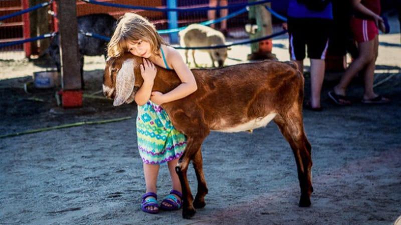 Rafiki's Planet Watch reopening petting zoo