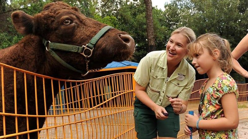Rafiki's Planet Watch reopening animal kingdom petting zoo