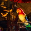 Enchanted Tiki Room Rumors