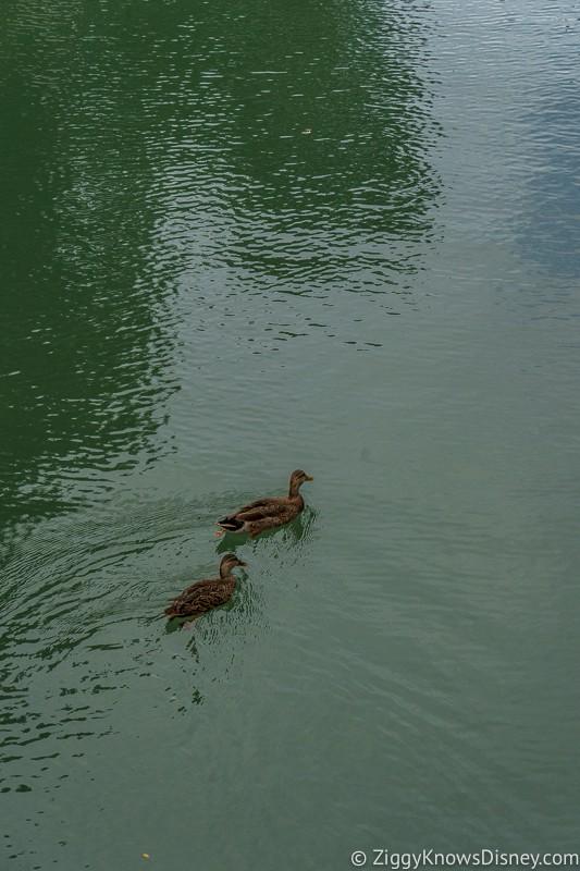 Cinderella Castle Moat Filled in Magic Kingdom Ducks