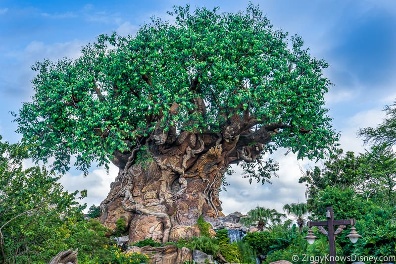 Animal Kingdom projects that might get budget cuts