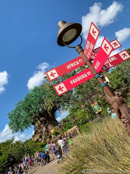 Summer in Disney World