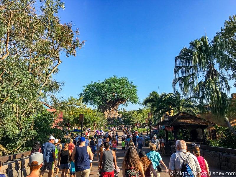 Disney World Crowds in Animal Kingdom