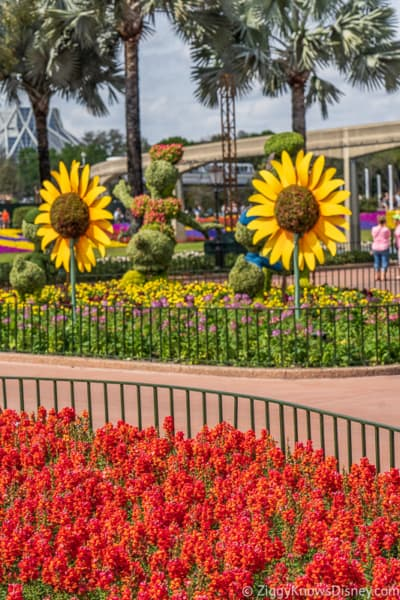 red flowers and Donald Daisy Duck Topiaries Epcot Flower and Garden Festival
