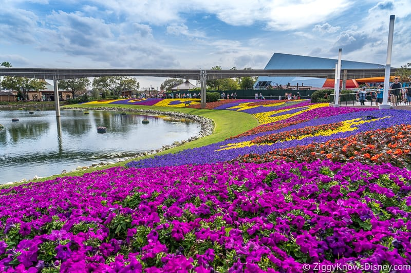 colored flowers for EPCOT Flower and Garden Festival
