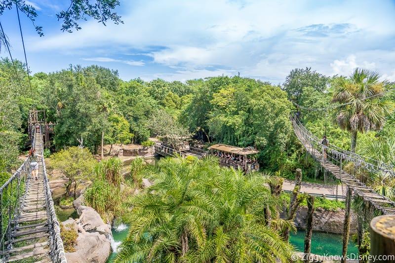 View from the bridges Wild Africa Trek Animal Kingdom