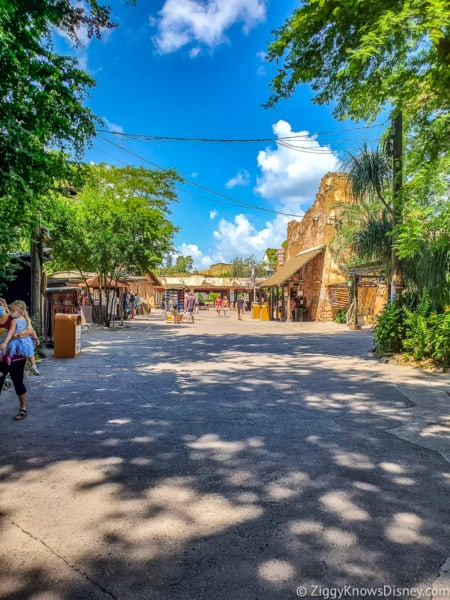 Animal Kingdom crowds after reopening