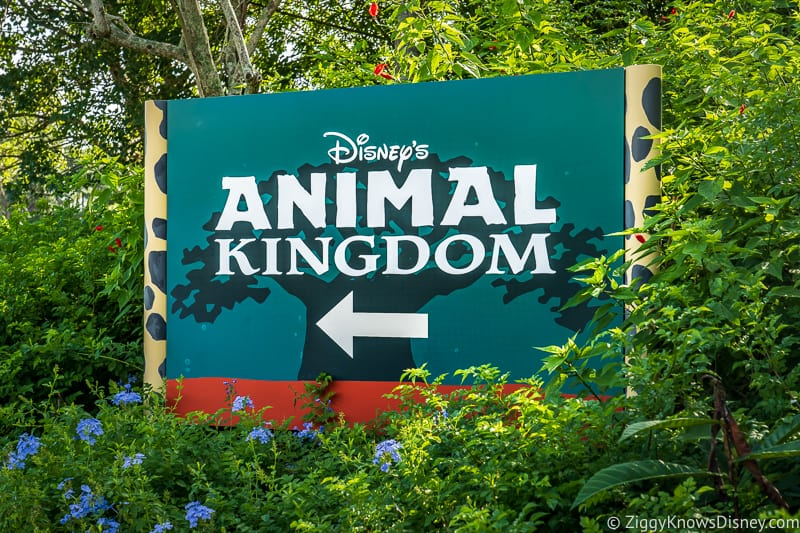 Animal Kingdom guide after reopening