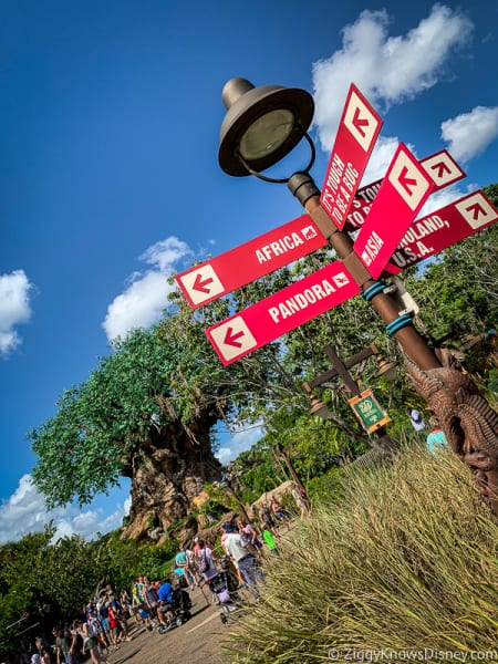 Animal Kingdom Lands Sign and Tree of Life