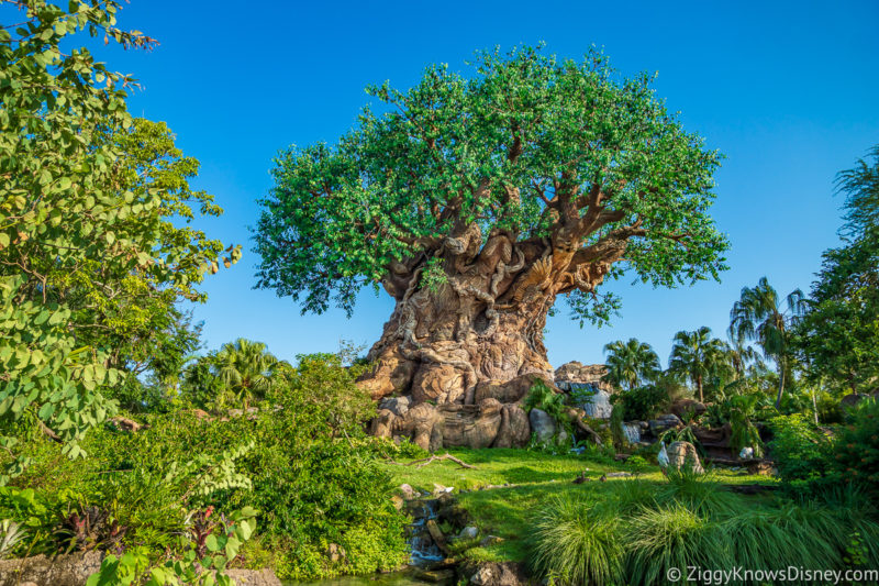 Tree of Life Animal Kingdom