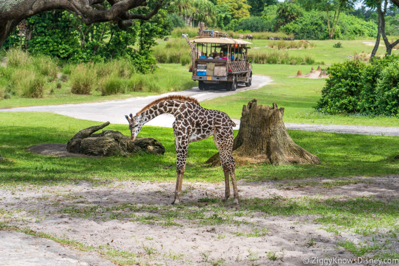 Kilimanjaro Safaris Disney's Animal Kingdom
