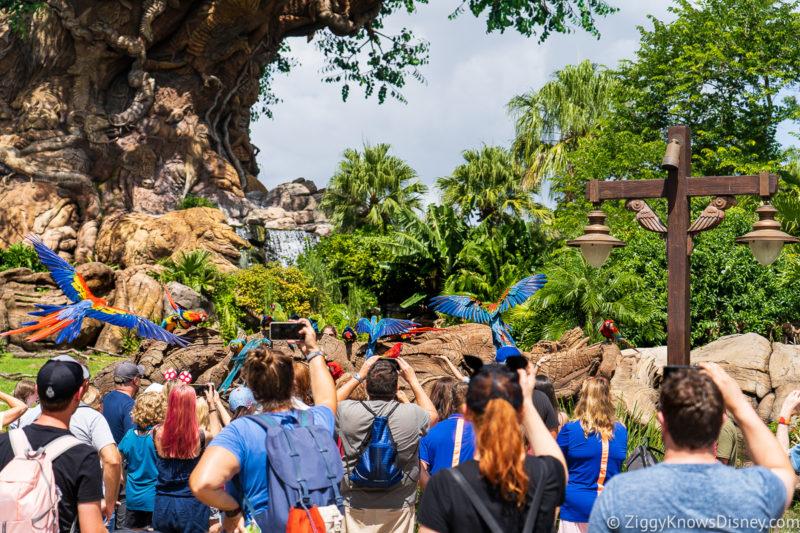 Animal Encounters: Winged Encounters Disney's Animal Kingdom Rides