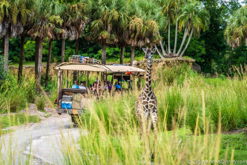 Kilimanjaro Safaris at Walt Disney World