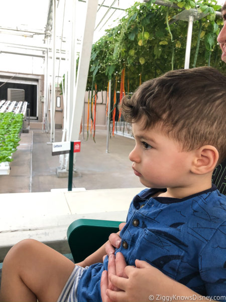 Living with the Land EPCOT with kids